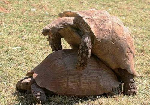的宠物龟_宠物龟交配引火灾 两龟\