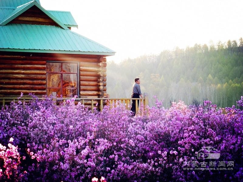 花海中的小木屋