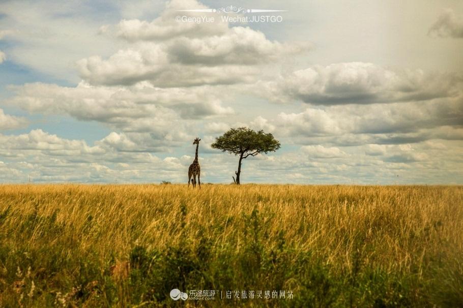 曾在《国家地理》,《动物世界》等各种非洲野生动物记录片中看到的