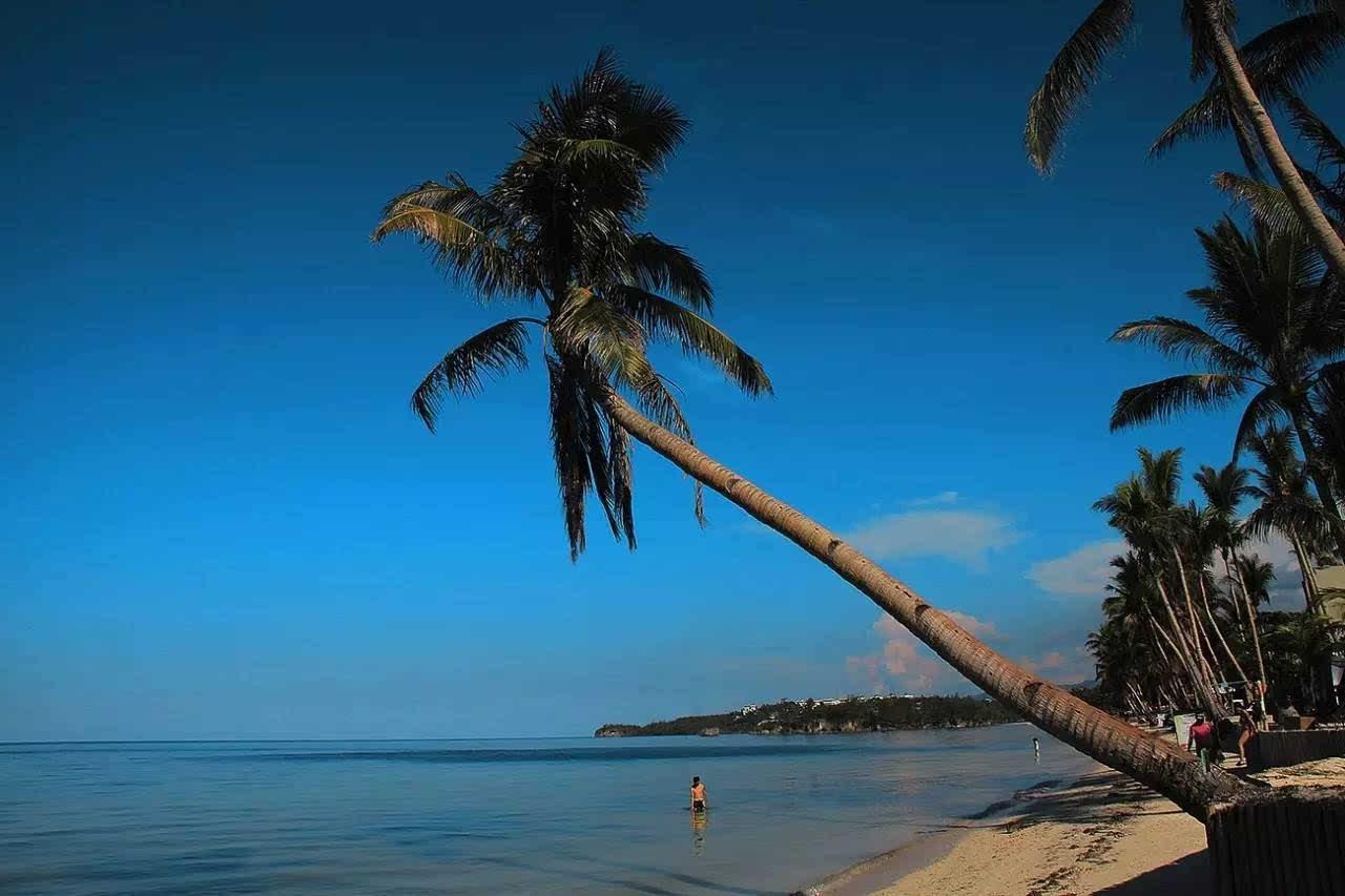 形态各异的椰子树,随处可见.