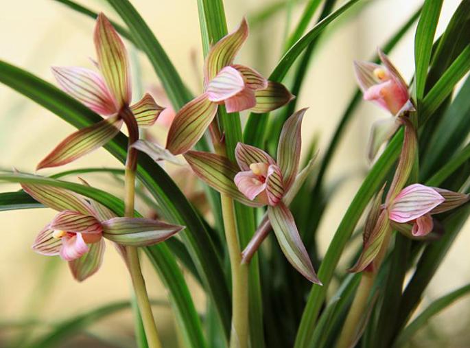 常见兰花品种有哪些图片