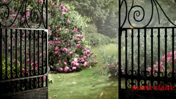 绽放的玫瑰花朵俨然是伯爵花园中至高无上