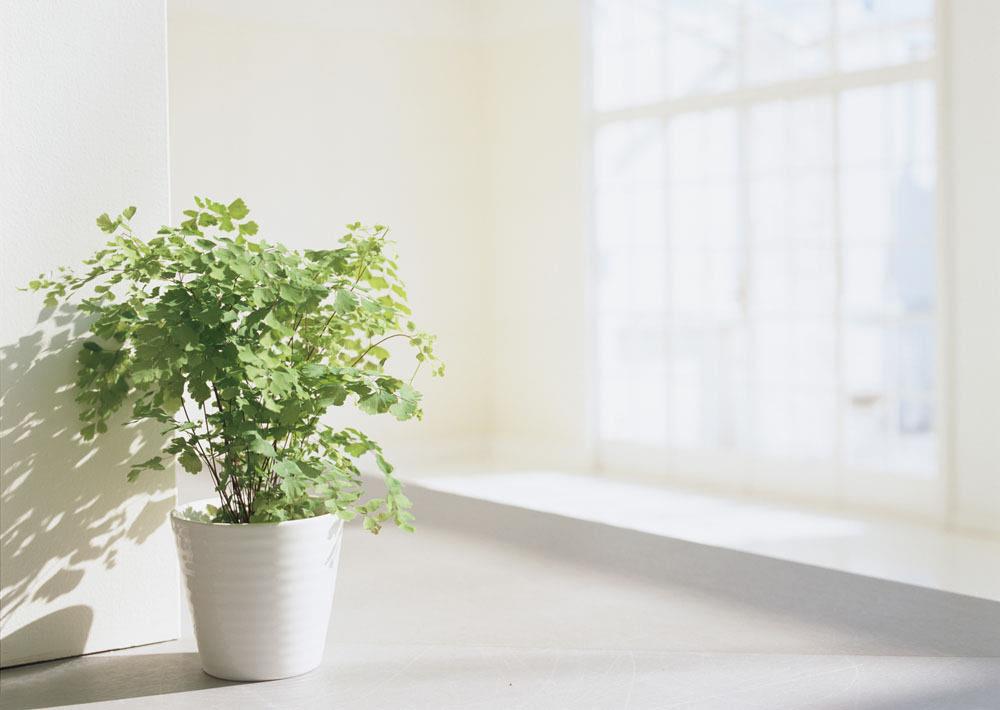 室内装修设计 室内盆栽植物选择