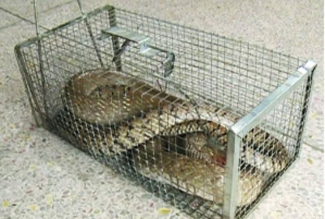 福建泉州市装蛇笼子图片