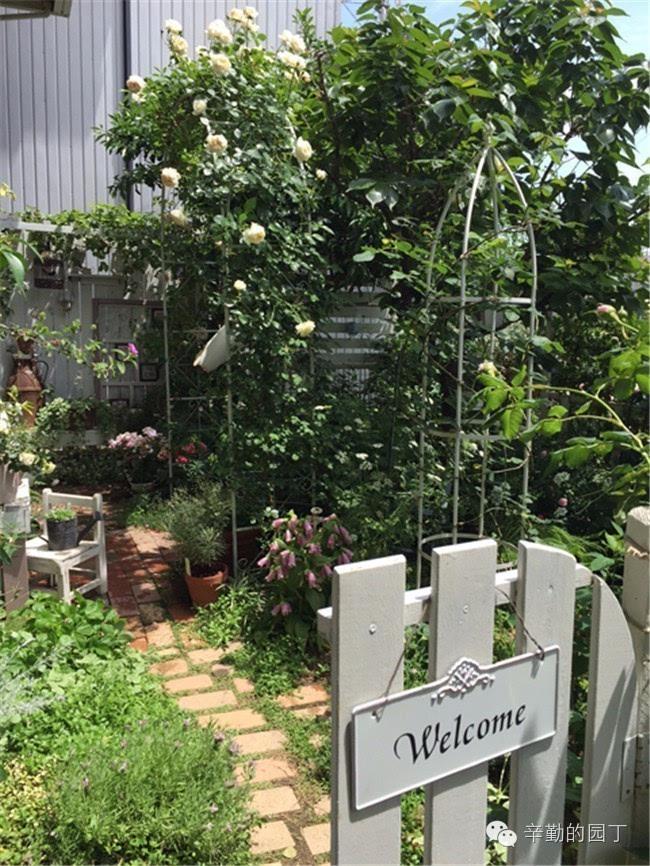憧憬的玫瑰花园为目标的手工制作的白色的长椅