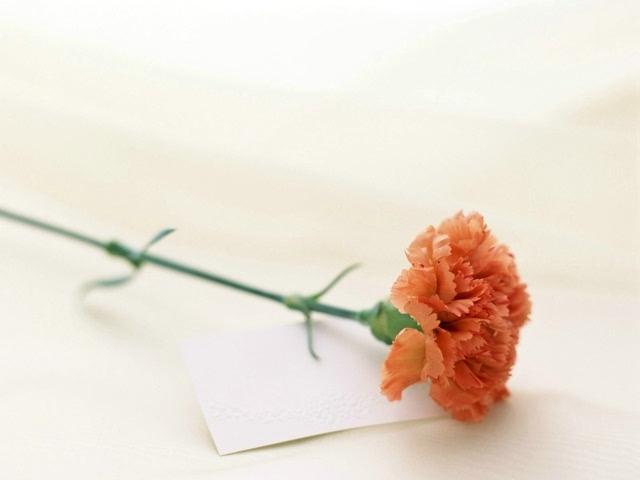 母亲节康乃馨唯美图片电脑壁纸