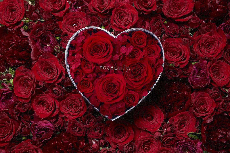 表白玫瑰花背景图片大全