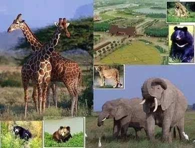 去野生动物园,斑马羚羊犀牛长颈鹿金丝猴,生命总是充满了诸多的灵性