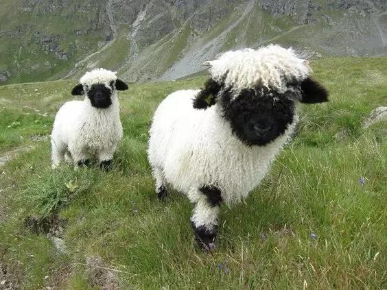 世界上最萌的18种动物,被第十种萌毙了!