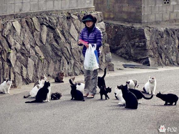 母猫生几只由什么决定图片