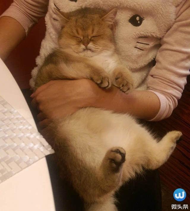 壁纸 动物 猫 猫咪 小猫 桌面 640_710