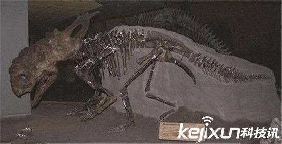 以上是动物世界曾经的王者,都是史前巨兽,他们辉煌的时刻都停留在远古