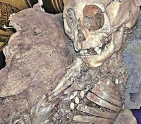 秘鲁惊现外星人婴儿头骨 竟有惊人50厘米长世界震惊