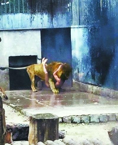 事发动物园 据英国媒体报道称,近日,智利首都圣地亚哥的一家动物园