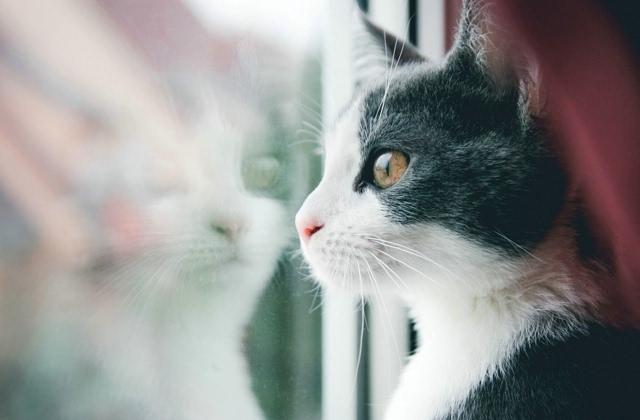 可爱猫猫唯美图片壁纸