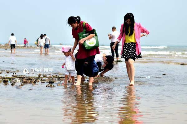 青岛石老人现赶海热 游人全家出动追捕小螃蟹(图)