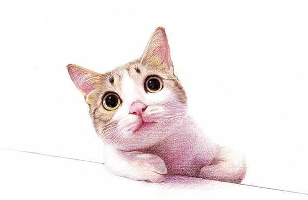 彩铅动物画画大全漂亮