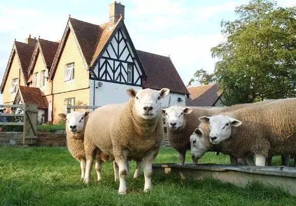微信动物头像羊