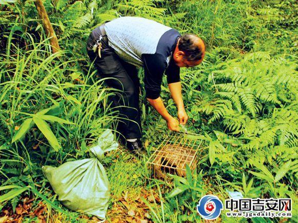 联合执法行动,严厉打击了乱捕滥猎,乱收滥购野生动物的行为.