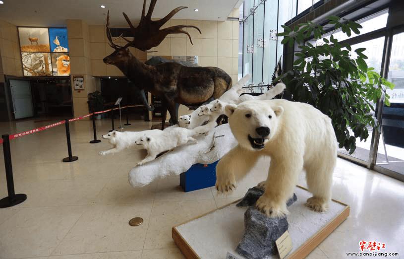 该馆集动物标本收藏与展示,科普知识宣传与教育,生物多样性描述与编目