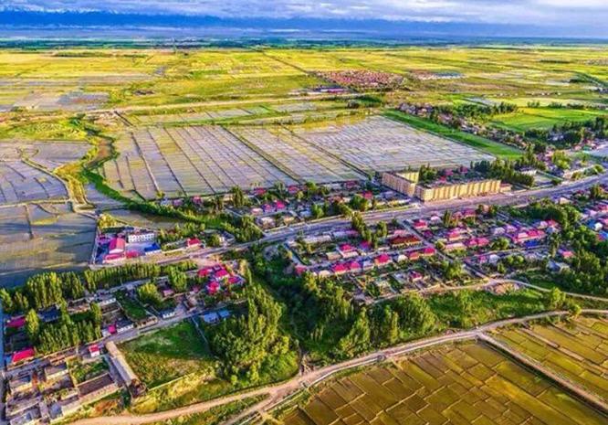 常州察布查尔县20万亩小学美如画三井怎么样新疆稻田图片