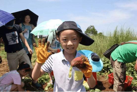 澄迈县哪个镇长寿人口多_健康长寿图片