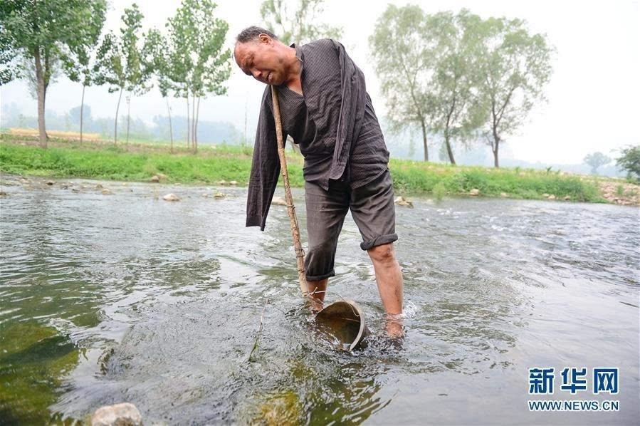 如今河边的50亩荒滩,已被贾海霞和贾文其联手变成了绿洲,身处林中,密得要看不见蓝天。身体上的残疾和生活上的贫困,并非是对他们人生的全部否定。 没人能想到,当初简简单单的一合计,无意间成就了一份10多年的坚持。图为5月31日,贾文其头夹木棍用水桶在树林边的小河里打水。