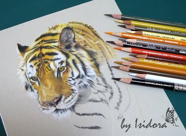 tiger 彩铅手绘过程(原创文章)