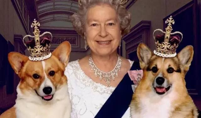 女王的柯基上映时间