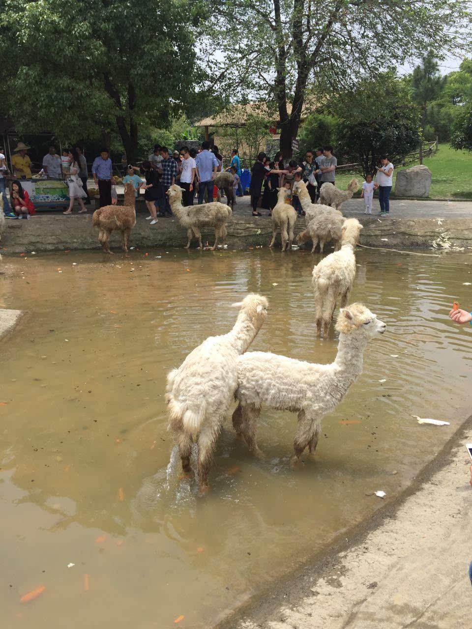 """[一写就""""惠""""]常州淹城野生动物园"""