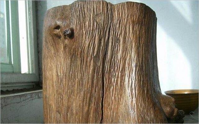 金丝楠木树图片,金丝楠木价格介绍