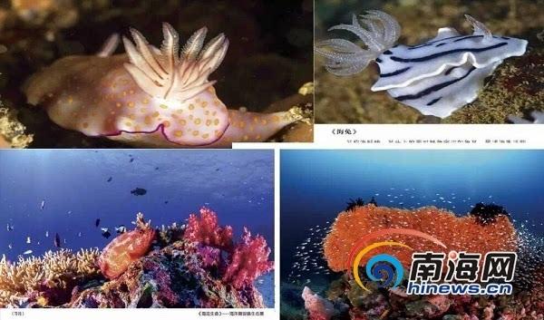 行动关注海洋,保护海洋