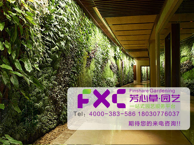 新加坡工业园咖啡厅室内植物墙,它是以六个画框为植物种植范围,在充分