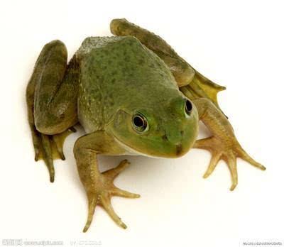 割伤青蛙打飞的送医 网友直呼超有爱心大写的赞