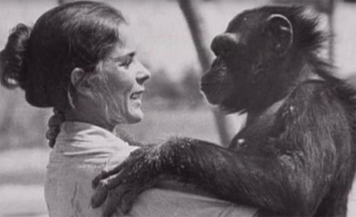 一位叫linda koebner的动物行为学家曾经从实验室的笼子里救出一只黑