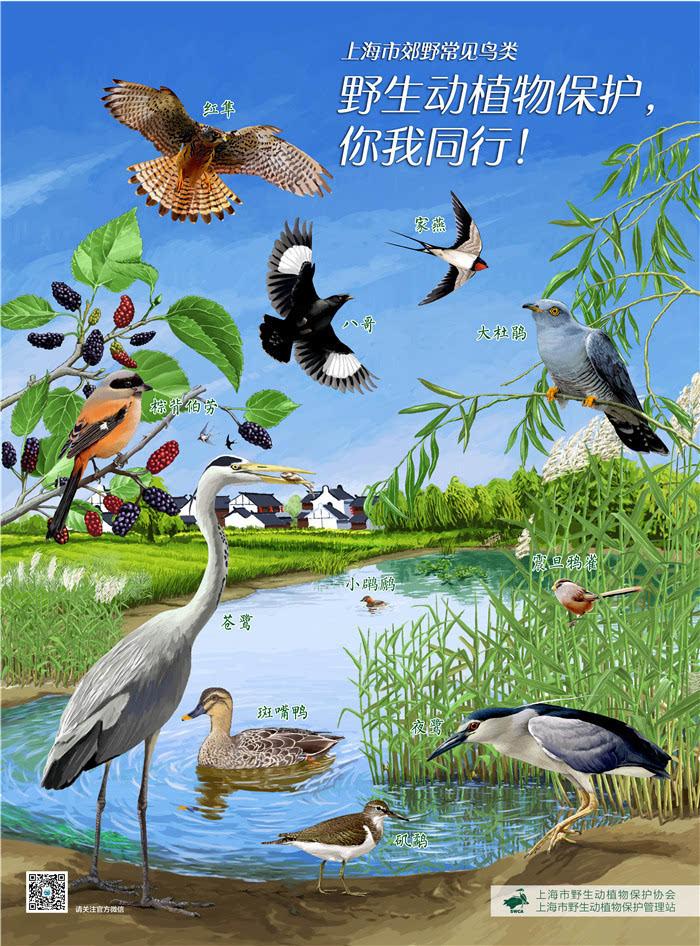 鸟类的宣传海报,分发各区县野生动物保护管理部门