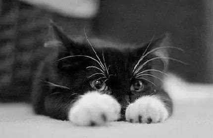 黑白霸气动物 头像
