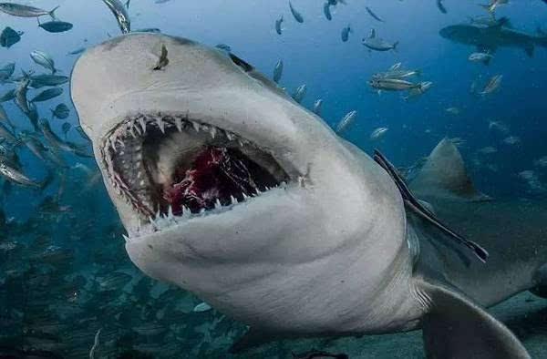 水下相机实拍!鲨鱼皮肤上居然还长了牙齿