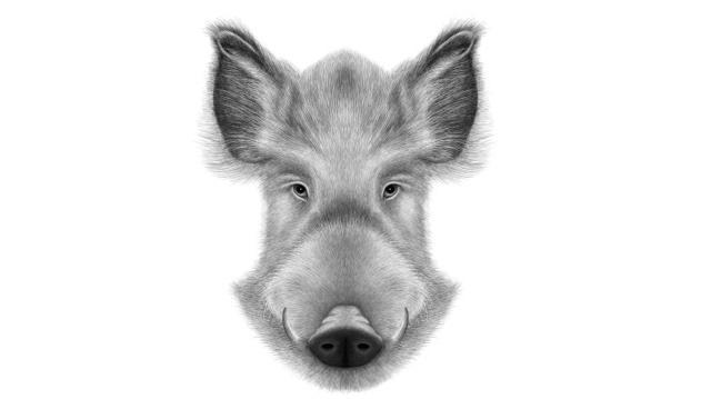 铅笔画动物肖像桌面壁纸