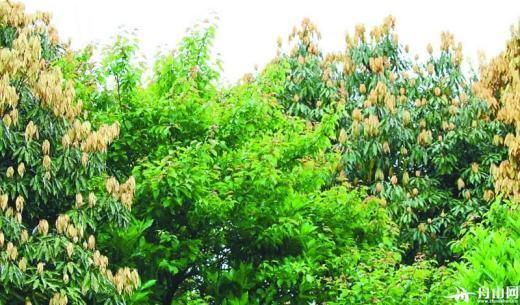 夏天到了,市民喜欢到树下乘凉,如果枯枝不除,将会带来安全隐患.
