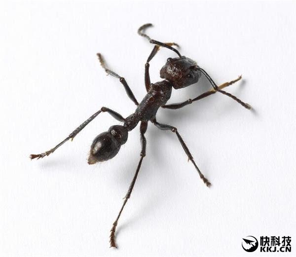蚂蚁会摔死?韩国人撒了个弥天大谎!