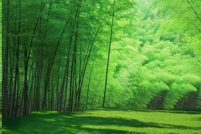 竹��b�ym~Z8{�����k�^ZJ~Y_动感991为你推荐最环保的纸,森林天使竹纤维本色纸——会呼吸的纸