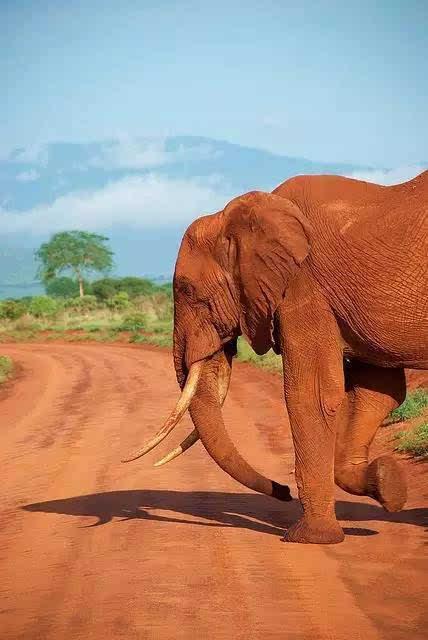 肯尼亚|疯狂动物大迁徙,一生总要见一次的奇迹时刻!