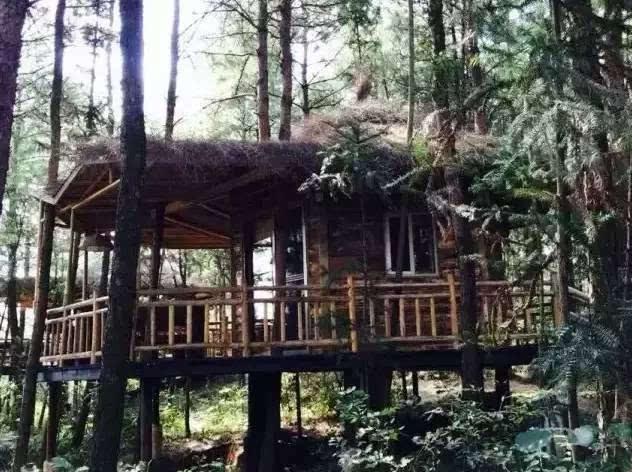 地址:彭水摩围山景区内 2巴南大来山森林木屋 大来山树屋位于平均