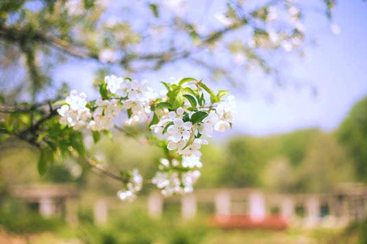 唯美花朵意境图片 阳光下美丽的花朵