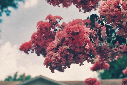 唯美意境花朵图片 你是如此清新淡雅