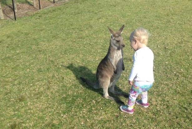 萌宠搞笑图第282波:网友带着侄女去动物园玩,很快交了