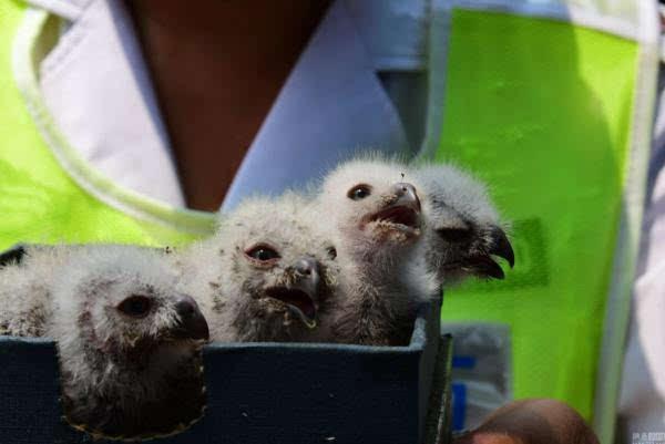于是,郭俊升今天上午就将它们送到了郑州市林业局野生动物救护站.