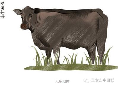 牛的全身部位图解