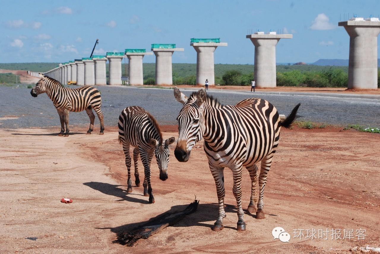而为了保护所经地区的动物正常活动以及原始生态环境,设计方便特别